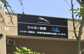 170620jaguar-kyoto-kyoto-city-zoo_thumb